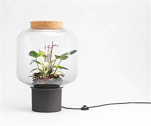 Pflanzen Die Kaum Licht Brauchen : zimmerpflanzen die wenig licht brauchen die mygdal pflanzenlampe hilft ~ Markanthonyermac.com Haus und Dekorationen