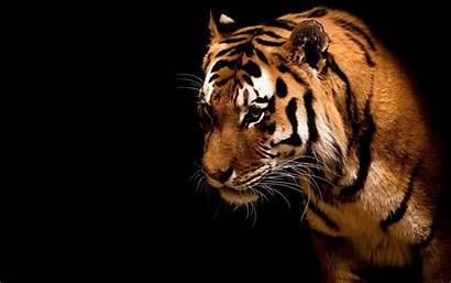 Desktop Wildlife Backgrounds Animal Background Wild