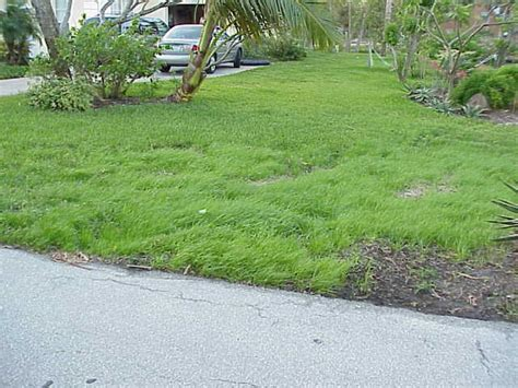 Beware Of Too-good-to-be-true Lawn Grass Seed