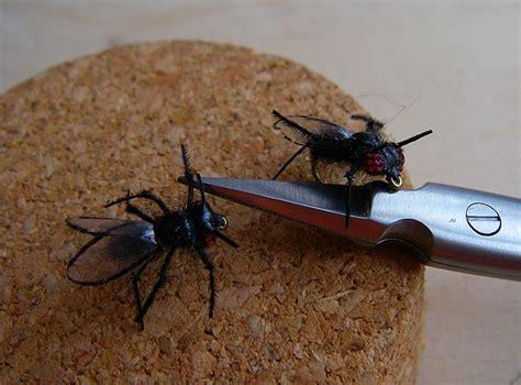 chasser les moucherons dans la cuisine attrape moucheron maison les clous de girofle pour