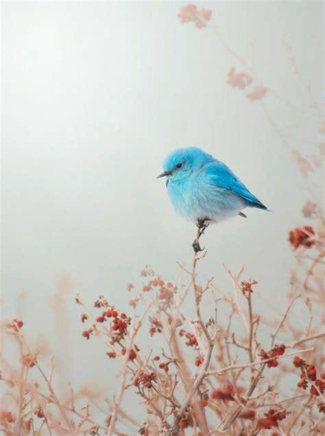 Bunte Federn  wie sie Vögel und Menschen tragen