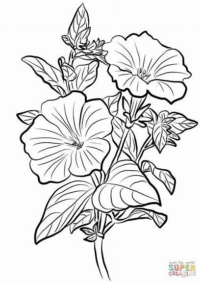 Petunia Colorear Dibujos Dibujo Kleurplaat Coloring Pig