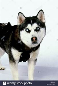 Pin Snow Dogs 2002 on Pinterest