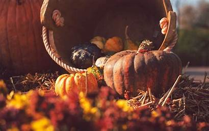 Pumpkin Harvest Straw Basket Autumn Background Widescreen