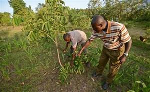 Climate Change Threatens East Africa's Food Security - The ...