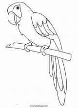 Pappagallo Coloring Parrot Rio Bird Animali Para Colorare Disegni Da Disegno Di Sul Outline Printable Birds Children Colorir Tuttodisegni Mazza sketch template
