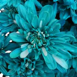 turquoise corsage turquoise blue flowers