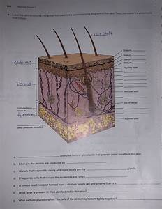 30 Label The Skin Structures And Areas Indicated In The