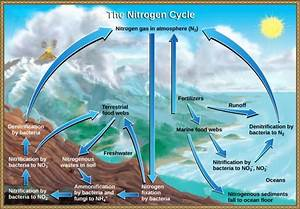 Nitrogen Cycle Diagram To Label Inspirational Biogeochemical Cycles In 2020