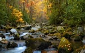 Creek, Pictures