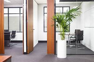 How, Indoor, Plants, Make, Your, Office, An, Asset
