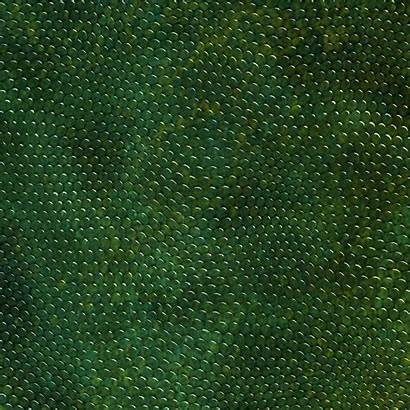 Texture Skin Reptile Snake Lizard Frog Background
