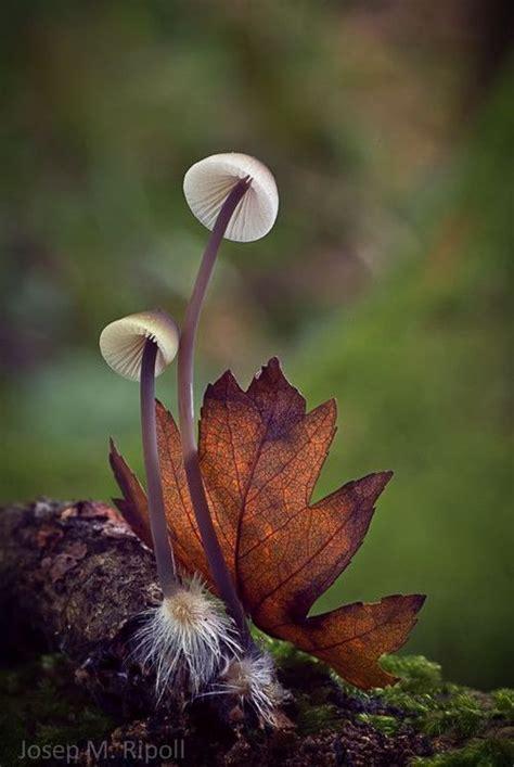 Zimt Gegen Pilze Im Garten by 25 Einzigartige Baumpilze Ideen Auf