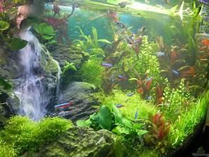 Aquarium 120l Mit Unterschrank : aquarium von stefan nibel becken 30905 ~ Frokenaadalensverden.com Haus und Dekorationen