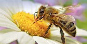 Welche Blumen Für Bienen : deutschland summt initiator cornelis hemmer im interview ~ Eleganceandgraceweddings.com Haus und Dekorationen