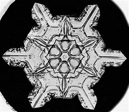 Snowflakes Bentley Snowflake Geographic National Wilson Snow