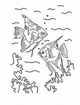 Angelfish Drawing Coloring Angel Fish Getdrawings sketch template