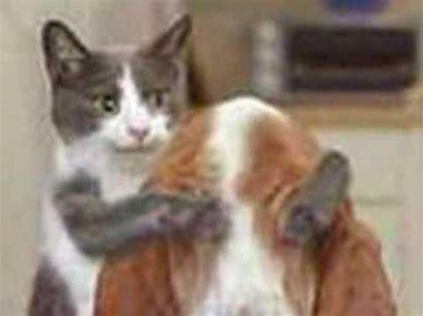 funny cat  dog pics youtube
