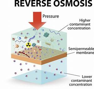 Examples Of Osmosis For A Better Understanding Of The Concept