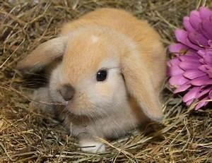 Welche Farbe Hat Das Weiße Haus : welche rasse ist dieses kaninchen fell ~ Lizthompson.info Haus und Dekorationen