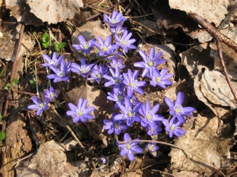 pavasara apgaitaa 8   Foto.oHo.lv