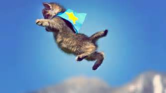 flying with a cat kittens fly in motion scottdw