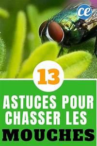 Eliminer Les Moucherons : chasser des mouches ~ Nature-et-papiers.com Idées de Décoration