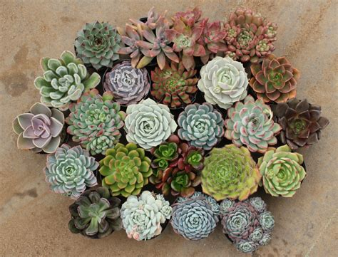 order succulents on trend succulents and cacti for interiors vkvvisuals com blog