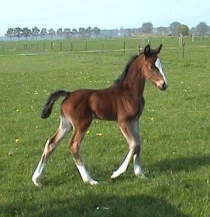 Horse Baby Horses