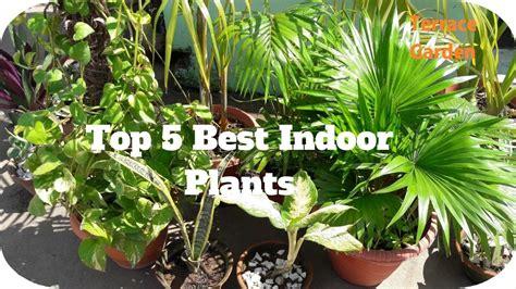 Top 5 Best Indoor Plants // Easy To Care And Grow Indoor
