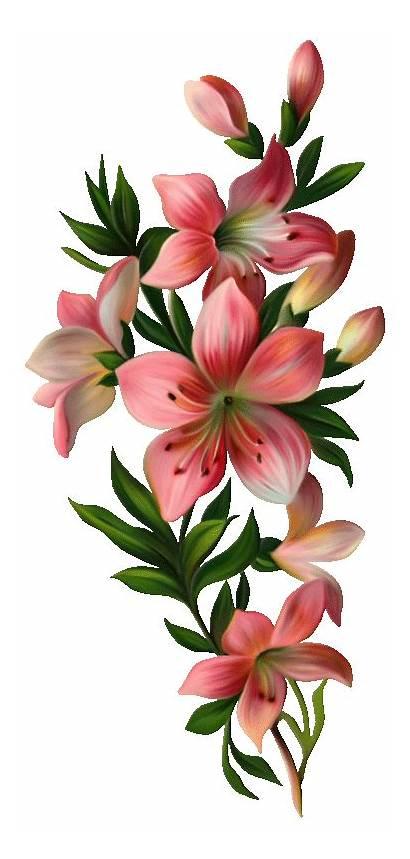 Flower Lily Clipart Flowers Flores Fleurs Bouquet