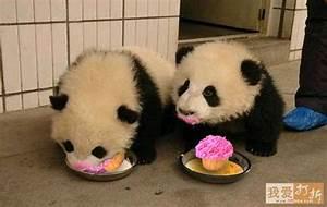 Panda Bears Eating Cupcakes   Cupcakes, Cakes and Recipes ...