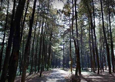 gunung pancar keindahan wisata alam hutan pinus  bogor