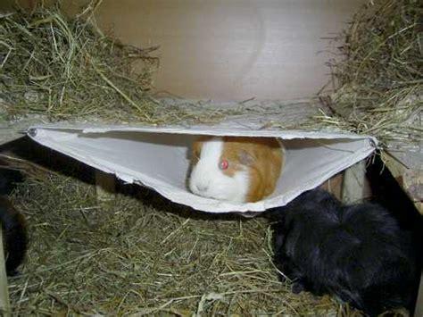 meerschweinchen info gehegeeinrichtung