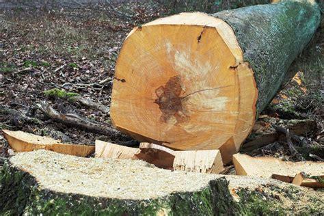 comment recuperer le bois dun arbre mort charles