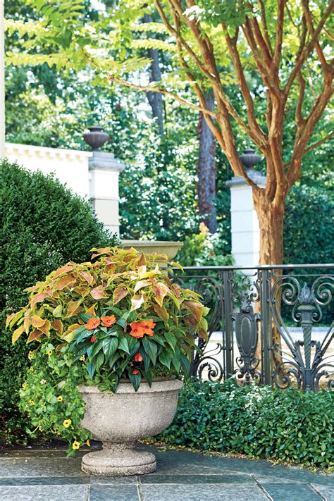 summer container gardens  obsessing  southern