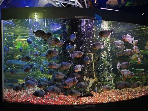Living Marine Aquarium 2 Animated Wallpaper - free animated aquarium desktop wallpaper wallpapersafari