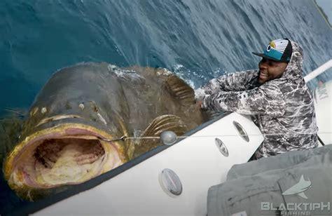 fishing goliath jawaan grouper taylor pound