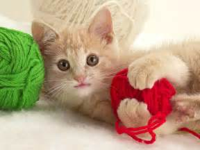 Cat Playing with Yarn