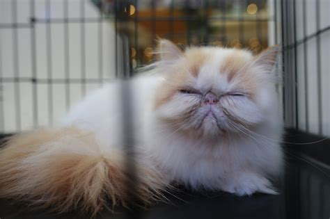 cat dangerous bites why cats getty hates reasons mind control most wang he