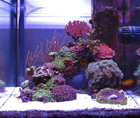 saltwater aquarium forum monthly featured nano reef aquarium profiles nano reef forums