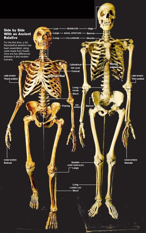 human evolution overall