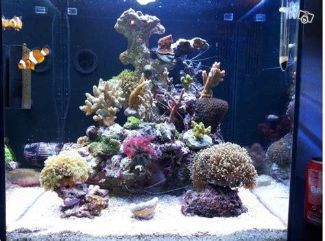 aquarium eau de mer fish only recifal premier aquarium 130l fc88100 pr 233 sentation de vos bacs picos et nanos