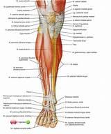 Что от боли в голеностопном суставе