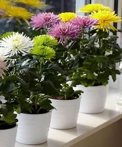 Quoi Planter En Automne : plantes pour l 39 am nagement d 39 un balcon en automne ~ Melissatoandfro.com Idées de Décoration