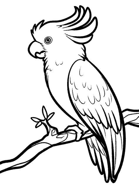 mewarnai gambar burung kakak tua untuk anak paud tk dan