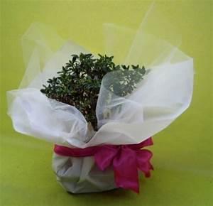 Idee bomboniere matrimonio: bonsai e piante grasse