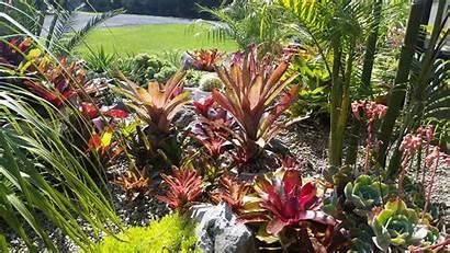 Plants Outdoor Subtropical Tropical