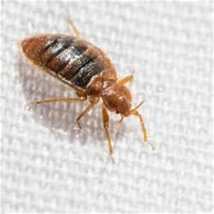 bed bugs in south portland maine With bed bugs portland