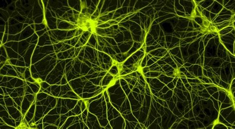 The first real-time, non-invasive imaging of neurons ...